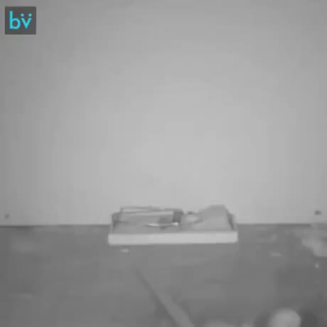 Watch and share Rats Are Getting Smarter GIFs by Gif-vif.com on Gfycat