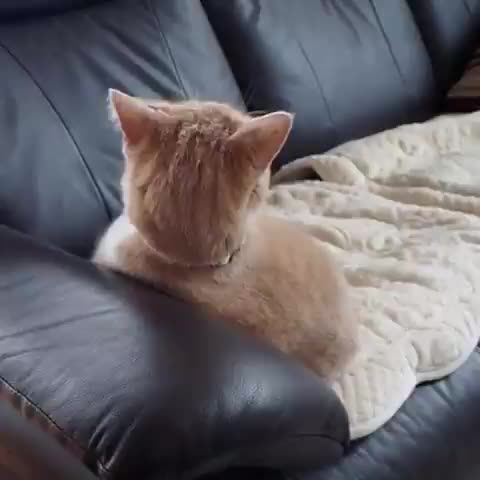 To be cute GIFs