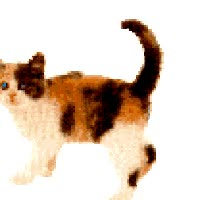 Watch and share Calico Cat animated stickers on Gfycat