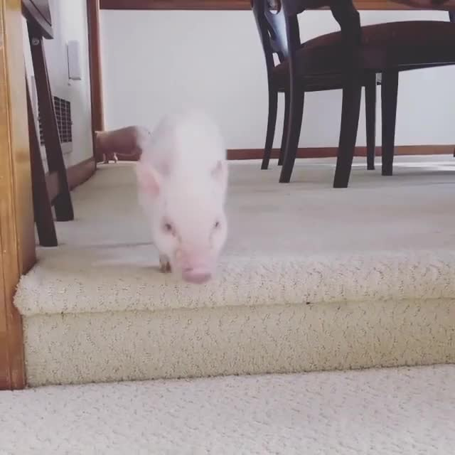 Watch and share Running Up And Down The Stairs GIFs by lnfinity on Gfycat