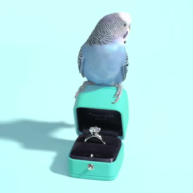 Watch and share Brilliant Gif GIFs and Blue Bird GIFs by Diamond Garden on Gfycat