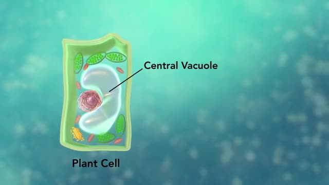 Watch and share Cell Structure GIFs and Cell Membrane GIFs on Gfycat