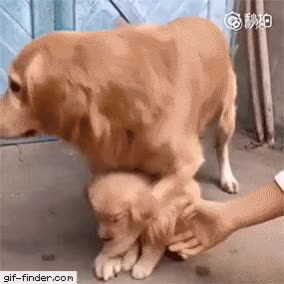 Watch and share Puppies GIFs and Canine GIFs by Pupstime on Gfycat