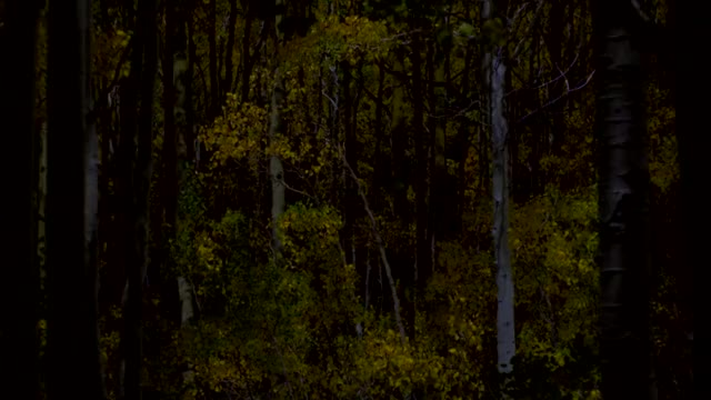 Watch Patterned Woods GIF by @jumproper on Gfycat. Discover more replications GIFs on Gfycat