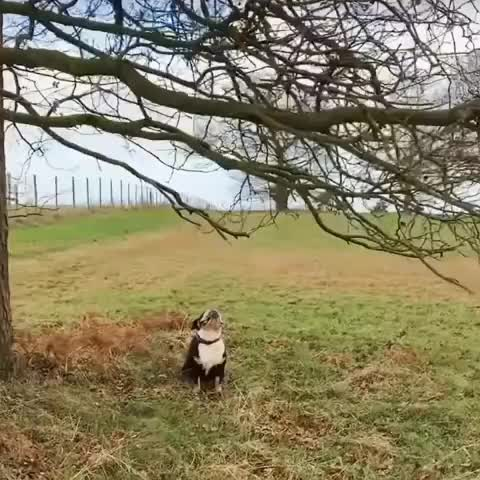 Watch and share Pupper Really Wants His Stick GIFs by tothetenthpower on Gfycat