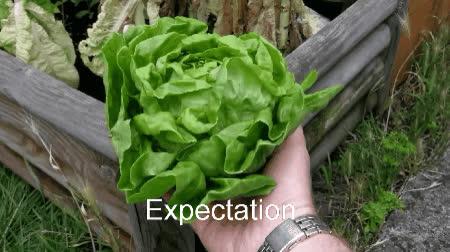 I grew a lettuce! GIFs
