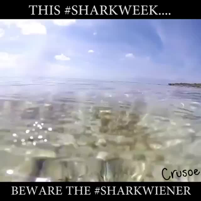 Watch and share Sharkwiener GIFs and Sharkweek GIFs on Gfycat
