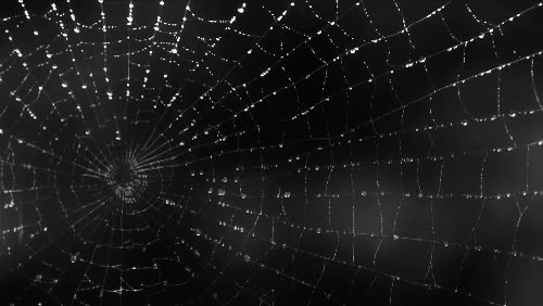Watch and share Spiderweb Animated GIFs on Gfycat