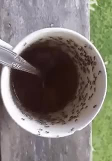 Watch this ant GIF by Yuyu (@yuyuaca) on Gfycat. Discover more animals, ant, ants, cool, whoa GIFs on Gfycat