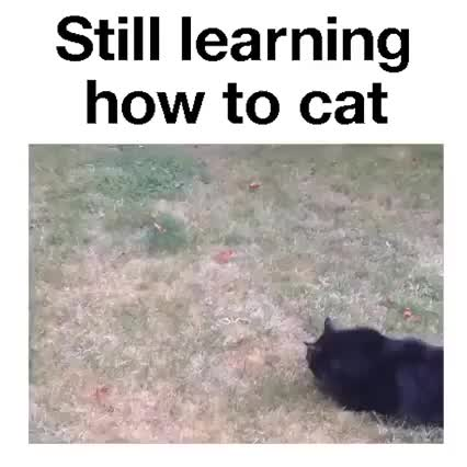Watch and share When Your Cat Just Can't Cat... GIFs on Gfycat