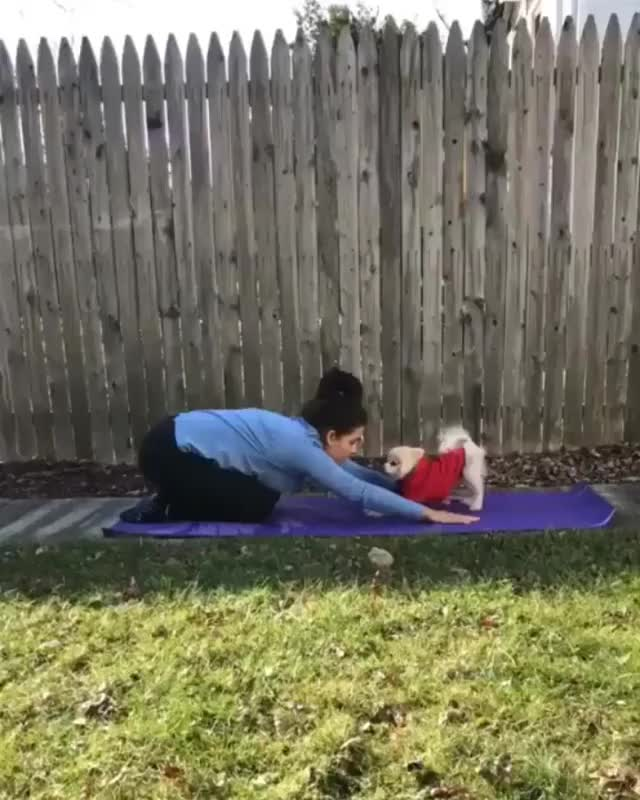 Watch and share Dog Doing Yoga With Owner GIFs on Gfycat