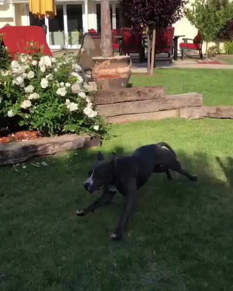 best friends in los angeles, Ultimate zoomies for this boy when he arrived at his foster home GIFs