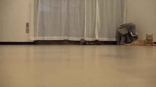 Watch Sony's Next Advert GIF by @sid on Gfycat. Discover more catpranks, catreactiongifs, startledcats GIFs on Gfycat
