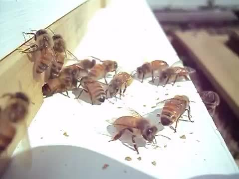beekeeping, Coming and going GIFs