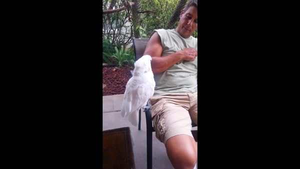 PartyParrot,  GIFs