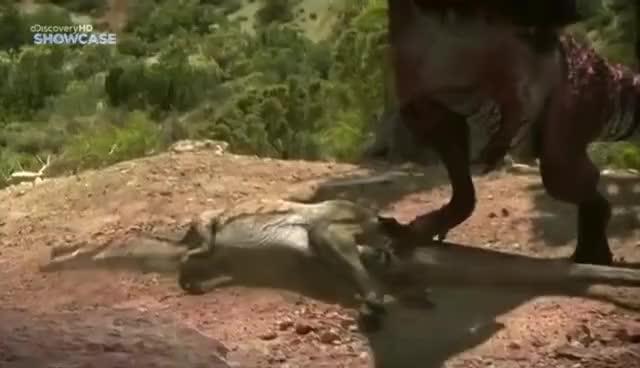 Best Epic Battles - Allosaurus Vs Torvosaurus   Find, Make ...