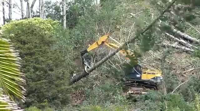 Watch and share Forest Machines Grappling Assisted Tree Felling. New Zealand Part 2 GIFs on Gfycat