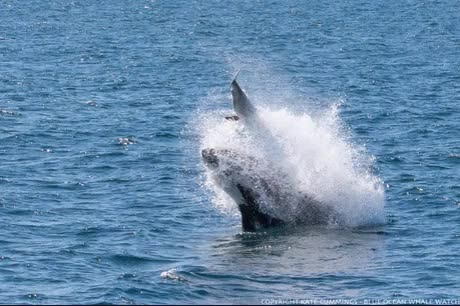 Watch and share Delphinus Delphis GIFs and Marine Science GIFs on Gfycat