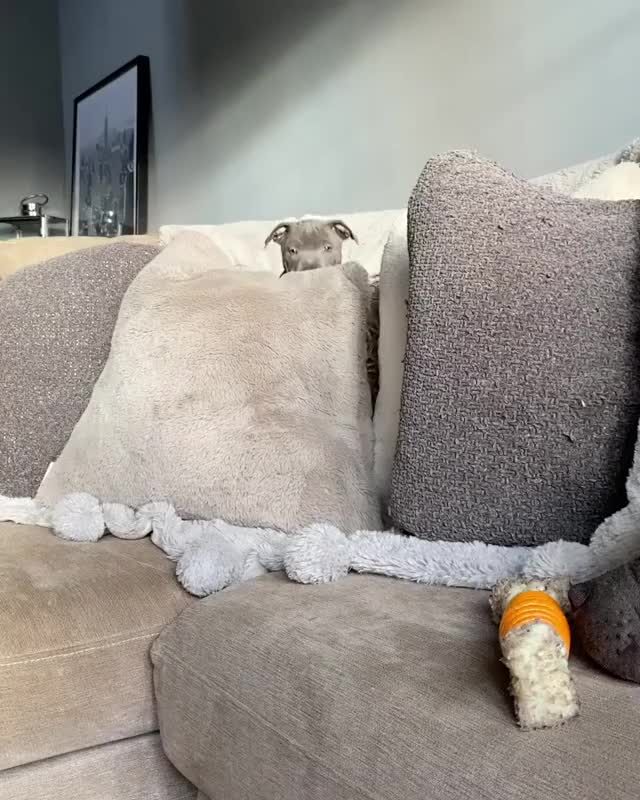 Watch and share Climbing Over To Her Favorite Spot GIFs by vani  on Gfycat