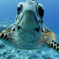 Watch and share Turtle GIFs on Gfycat