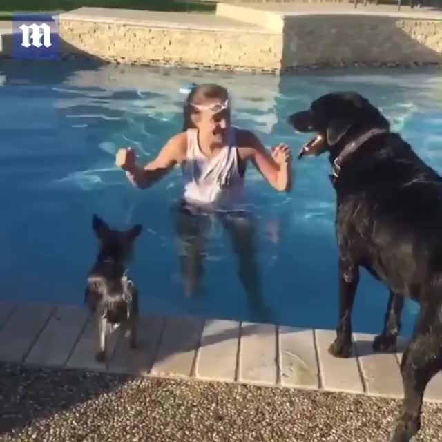 Watch and share Who Needs Doggy Paddle When You Have Doggy Saddle?! GIFs by HoodieDog on Gfycat