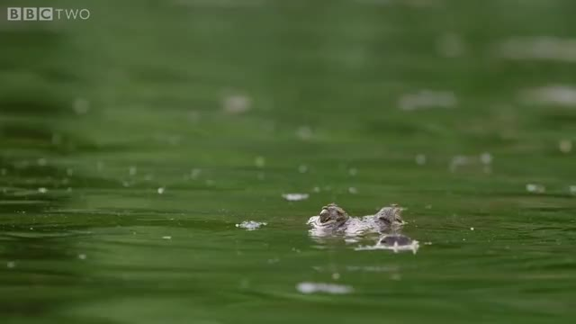 Watch and share Flying Fox GIFs and Crocodile GIFs on Gfycat