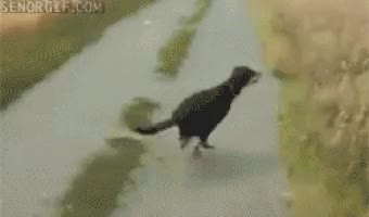 Watch and share Playful Paws: 15 Crazy Dog GIFs on Gfycat
