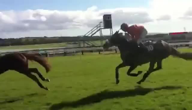 Watch and share Horse GIFs on Gfycat