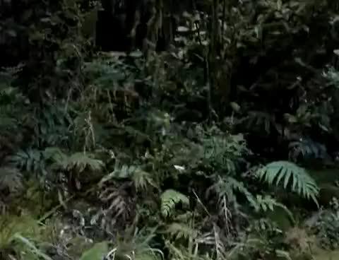 Watch and share Kiwi GIFs on Gfycat