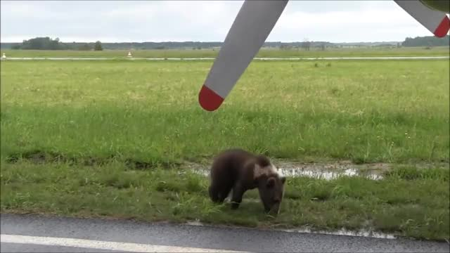 Watch and share Airplane GIFs and Aviation GIFs on Gfycat