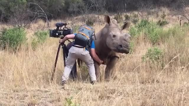 Filming Up Close And Personal With A Rhino!
