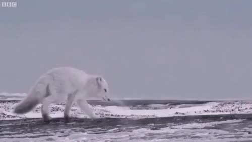 Watch and share Wildlife GIFs and Animals GIFs on Gfycat