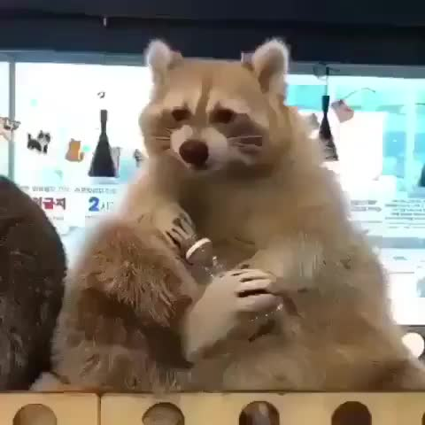 raccoons 🦝, Snack time GIFs