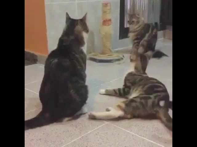 Watch and share One Step From Calm To Panic (reddit) GIFs on Gfycat