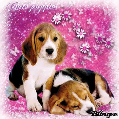 Watch and share Beagle Puppies GIFs on Gfycat