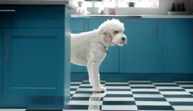 Watch and share Flash Ah-ah Dog #FlashDog 2016 Advert | P&G UK And Ireland GIFs on Gfycat