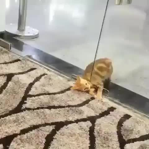 Watch and share Cats GIFs by rayneflower on Gfycat