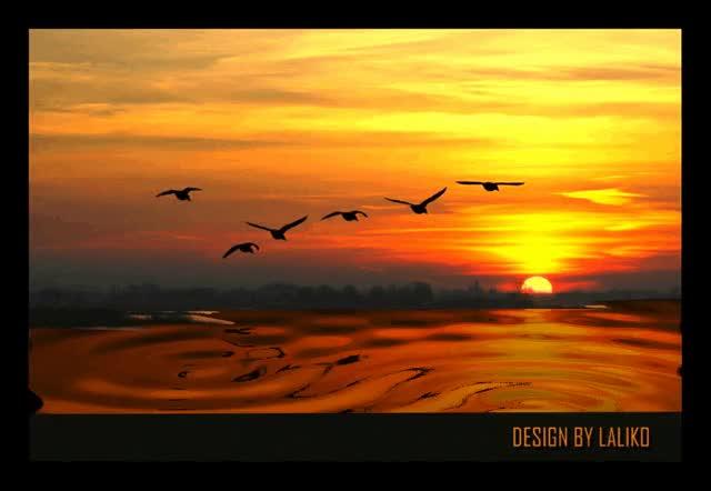 Watch and share Озеро Закат И На Фоне Этого Птицы Парящие В Небе GIFs on Gfycat