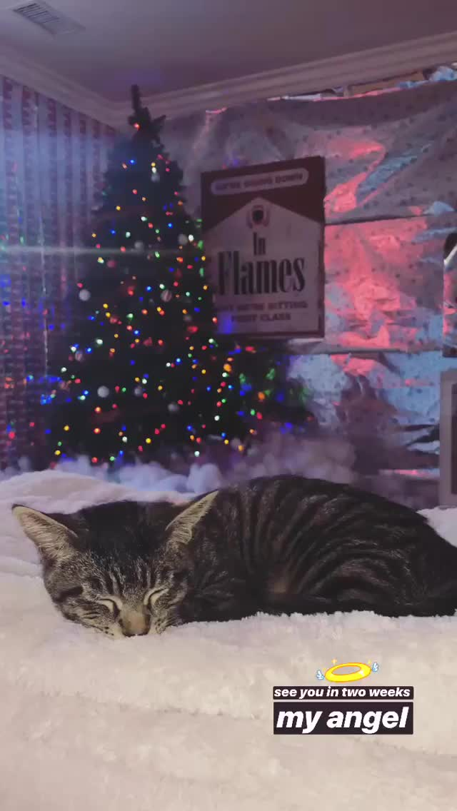 Watch and share Kylierae 2018-12-08 08:12:37.823 GIFs by Pams Fruit Jam on Gfycat
