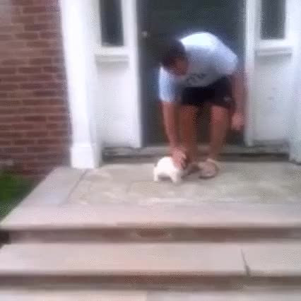 Watch and share Boring Day? Here's A Puppy (reddit) GIFs on Gfycat