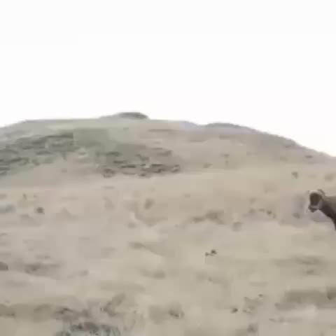 The sheer power of two rams colliding GIFs