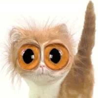 Watch and share Gato Que Bonita GIFs on Gfycat