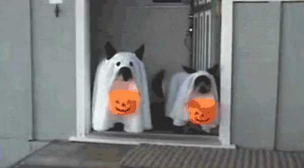 Watch this halloween GIF by The GIF Smith (@sannahparker) on Gfycat. Discover more boo, halloween, happy halloween, scary, trick or treat GIFs on Gfycat