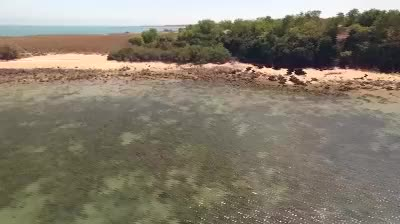 Watch and share Coral Bleaching In The NT GIFs by abcdarwindigital on Gfycat