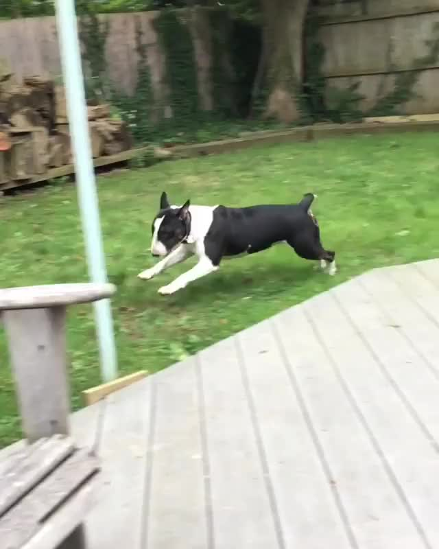 Watch zoomies GIF by PM_ME_STEAM_K3YS (@pmmesteamk3ys) on Gfycat. Discover more related GIFs on Gfycat