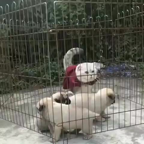 Watch and share Puppies GIFs and Cat GIFs by RespectMyAuthoriteh on Gfycat