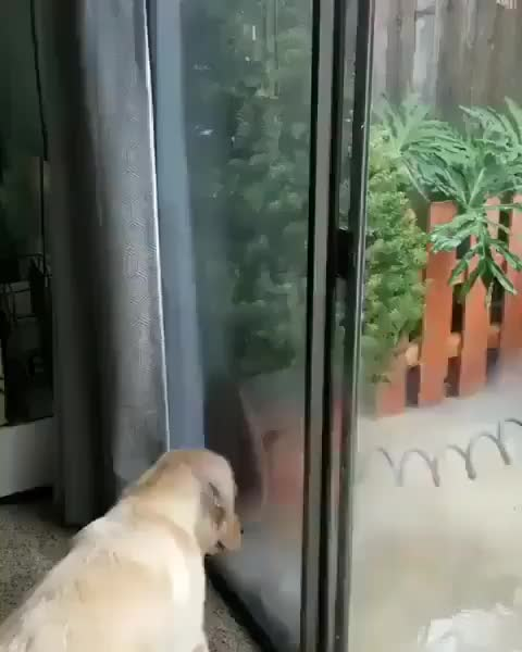 Pupper attempting to catch the water spout of doom GIFs