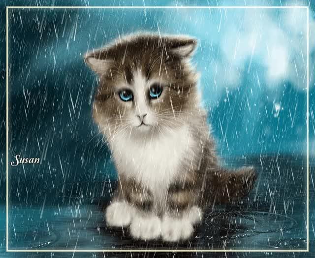 Watch Gato bajo la lluvia GIF by Susan (@susanlu4esm) on Gfycat. Discover more animals, beautiful cat, cat, moment rain, rain, romantic GIFs on Gfycat
