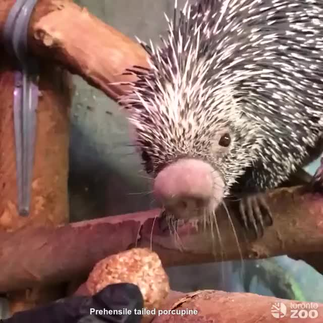 Watch and share Absolute Unit - Imgur GIFs by marshal on Gfycat