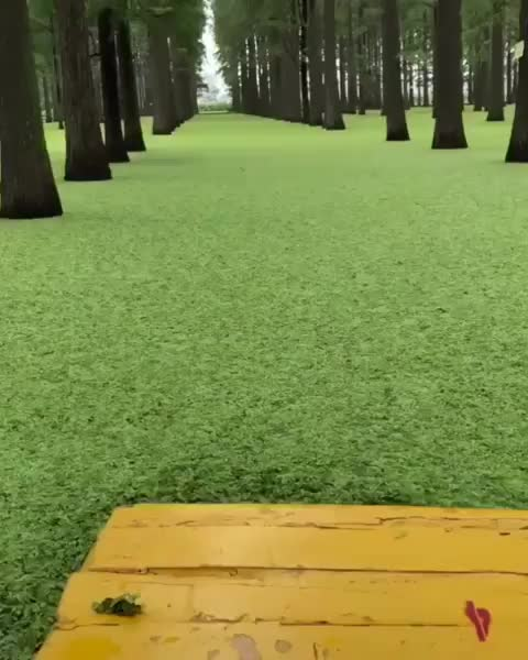 Watch and share Nature GIFs by Boojibs on Gfycat